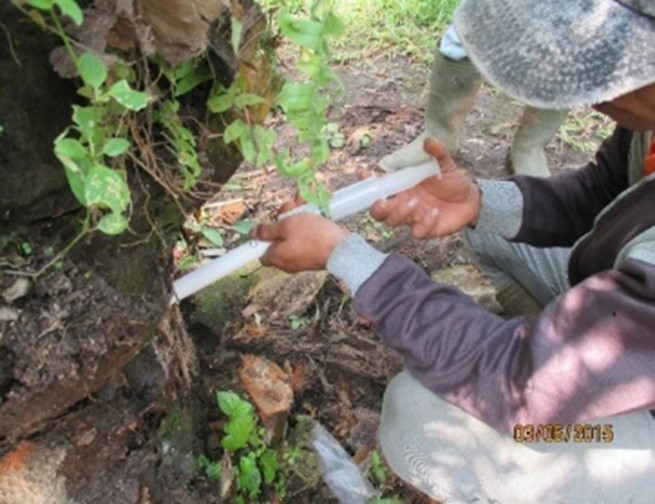 Pengoptimalan Teknologi Fungisida Organik (Ganor) untuk Menyehatkan Tanaman Kelapa Sawit Terserang Ganoderma