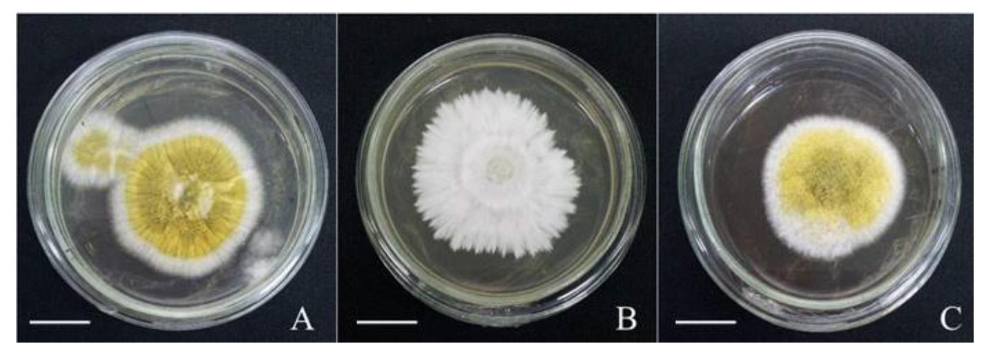 Isolasi dan Karakterisasi Protease Inhibitor dari Lateks Tanaman Karet yang Berpotensi dalam Pengembangan Biofungisida