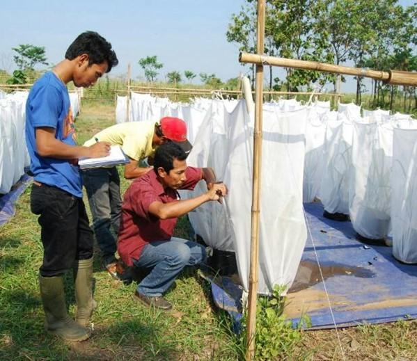 Integrated Disease Management of Sugarcane Streak Mosaic Virus